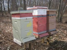 Stevens beekeeping blog about his experiences in Dudley, MA are filled with posts about his experiences so worth a read