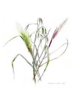 Grass Flowers Botanical Watercolor