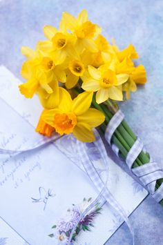 Narcissus with purple gingham ribbon
