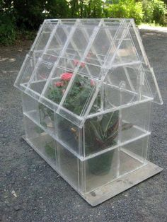 Reupcycled CD case mini greenhouse.