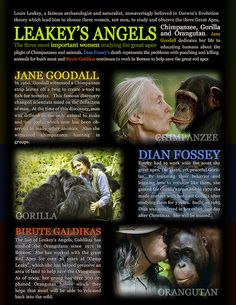 """Leakey's Angels - Poster by Evan Animals, via Flickr Jane Goodall kissing Chimpanzee, photo credit to Jean-Marc Bouju. Dian Fossey Birute Galdikas kissing an orangutan can be found in """"Sanctuary the Book"""" by Michael Tobias and Jane Gray Morrison"""