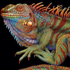 reptielen draken - Google zoeken