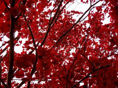 Red-Color-Inspired-Photography4