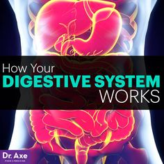 How Your Digestive System Works - Dr. Axe