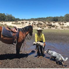 Mcleod's Daughters, Another Day In Paradise, Australian Cattle Dog, Country Girls, Westerns, Horses, City, Sheep, Dogs