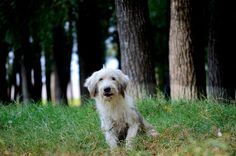 Forest dog by Stoian Marius Gallery, Dogs, Photos, Animals, Animales, Animaux, Animal Memes, Animal, Pet Dogs