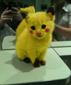I don't like Pokemon but this is just cute!