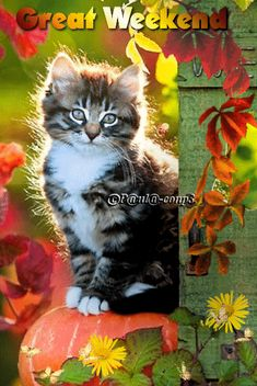 gif photo by Bon Weekend, Happy Weekend, Happy Day Gif, Good Morning Gif, Gifs, Cute Cats And Kittens, Good Luck, Beautiful Butterflies, Cool Websites