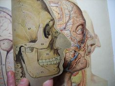 Anatomy manikin paper dissection skeleton by FromEuropeWithLove