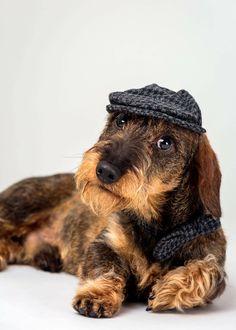 Mini Dachshund, Dachshund Puppies, Daschund, Dogs And Puppies, Dachshunds, Wiener Dogs, Doggies, Scottish Terrier, Homeless Dogs