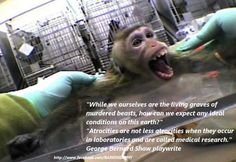 animal rights | Tumblr  Lab torture must end!  There is no reason to put an innocent animal through heinous experiments and pain.  Please advocate to end this barbaric practice.  Please share (Pin).