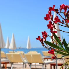 Zplage beach club at Grand Hyatt Cannes Hotel Martinez is one of the largest private beaches on the famed Promenade de la Croisette on the Mediterranean Sea.