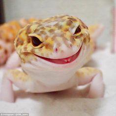 PsBattle: This Gecko lizard Smiling Animals, Happy Animals, Cute Baby Animals, Animals And Pets, Funny Animals, Leopard Gecko Habitat, Leopard Gecko Care, Cute Lizard, Cute Gecko