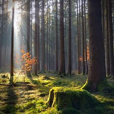 In the Woods by M@riko : ) on 500px