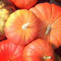 French pumpkins at Golden Earthworm Farm's local harvest festival this week in NY.  http://www.goldenearthworm.com/