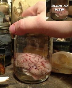 Classic+Brain+in+a+Jar++Preserved+Wet+by+BlackBearBathSalts