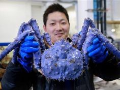 Red king crab caught in Bering Sea is lavender-colored, baffling experts | GrindTV.com
