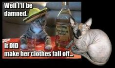 That's My Cat! LMAO!  ~AneurisM #funnypictures #humor #memes