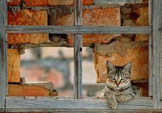 el gatito en la ventana |