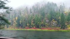 """halleydoedog: """" passthecavasier: """"The Pacific Northwest is fucking Perfect """" Wanna see this """""""