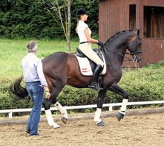 The former First Chief Rider at the Spanish Riding School explains the scale for measuring degrees of dressage collection. By Arthur Kottas-Heldenberg with Beth Baumert for Dressage Today magazine.