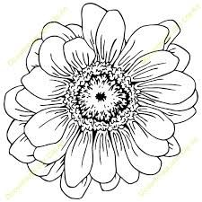 Image result for zinnia flowers drawing