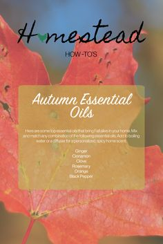 Pick these Autumn essential oils up next time you're at the store and your home will thank you. :)