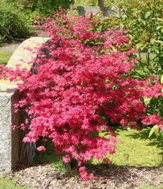 Billedresultat for Havetræer Small Gardens, Garden Inspiration, Planting Flowers, Beautiful Flowers, Planters, Cottage, Manga, Green, Skagen