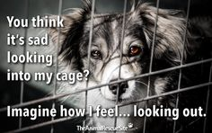 The Animal Rescue Site. Click the purple button to help shelter animals!
