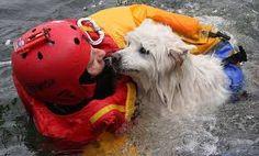 Resultado de imagen para group of rescue wild animals