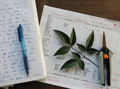 Tips for creating a useful garden journal | From @Sharon Macdonald Macdonald Macdonald Macdonald Avey HQ