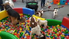 The Murphy Pack - Canine Leisure Centre - Facilities