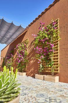 Beautiful Desert Garden Design Ideas For Your Backyard Desert Backyard, Terrace Design, Balcony Garden, Shade Garden, Garden Inspiration, Backyard Landscaping, Outdoor Gardens, Outdoor Living, Shade Ideas For Backyard