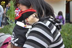 2da Pasarela de mascotas disfrazadas con motivo de Halloween 2015