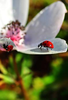 Ladybug Garden.  HD Nature, baby!
