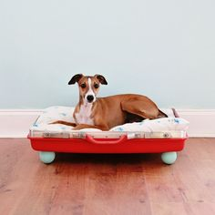 Beau & Roux's Corner- DIY Pet Bed | My So Called Crafty Life
