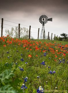 Photography Secrets The Pros Don't Want You To Know Farm Windmill, Old Windmills, Country Scenes, Back Road, Water Tower, Blue Bonnets, Old Barns, Le Moulin, Covered Bridges