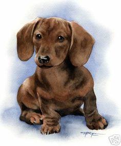 Dachshund Puppy Dog Art 11 x 14 Print Signed DJR | eBay