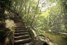 Fairmount Park   Travel   Vacation Ideas   Road Trip   Places to Visit   Philadelphia   PA   Picnic Ground   Hiking Area   Nature Reserve   City Park