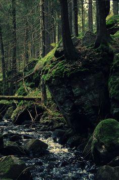 Dark Forest, Sweden