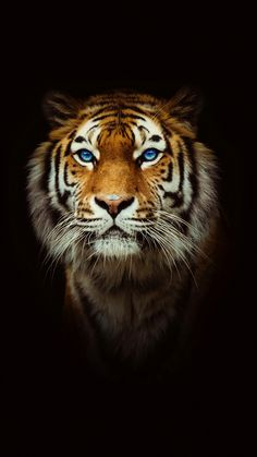 """Eye of the Tiger"" tigre Beautiful Cats, Animals Beautiful, Gorgeous Eyes, Pretty Eyes, Big Cats, Cats And Kittens, Kitty Cats, Animals And Pets, Cute Animals"