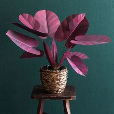 I love a dark and moody plant! Get the instructions, templates, and materials list to make this in 'Handmade Houseplants: Remarkably Realistic Plants You Can Make with Paper' available wherever books are sold! Photo by Christine Han 🌿. Paper Leaves, Paper Flowers, Garden Plants, Indoor Plants, Chinese Money Plant, Belle Plante, Paper Plants, Inside Plants, Pink Plant