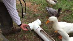 A Better DIY Backyard Duck Feeder