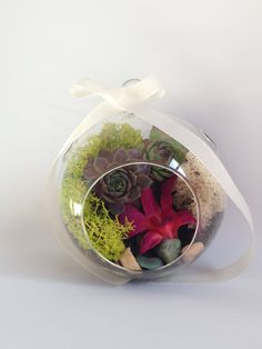 Handblown Glass Orb Live Succulent Terrarium Orchid  Moss Wedding Bridal Bridesmaid Baby Shower Favor Centerpiece or Backdrop on Etsy, $45.00