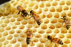 good scale of bee to honeycomb ratio public domain honeycomb | 꿀벌, 건물 벌집, 꿀, 꿀 꿀벌, 벌집, Buckfast, 빗 ...