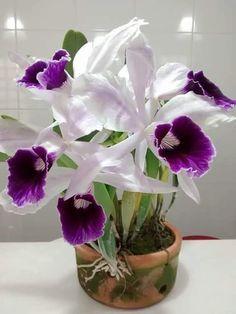 Cymbidium Orchids, I think Unusual Flowers, Big Flowers, Amazing Flowers, Purple Flowers, Beautiful Flowers, Orchid Flowers, Tropical Flowers, Orchids Garden, Orchid Plants