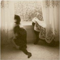 old timey kitties.
