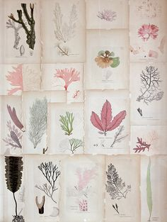 Coral botanical prints