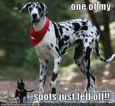 ONE OF MY SPOTS JUST FELL OFF PACK BUDDY REHABILITATES RESCUE/SHELTER DOGS TO SERVE AS SERVICE DOGS FOR CIVILIANS AND, FREE, FOR U.S. VETERANS. SAVE A DOG, SAVE A VETERAN. David Utter, Dog Trainer: Separation Anxiety, Service & Therapy Dogs, PTSD, Depression, Panic Attacks, Behavior Modification, Water Rescue, Obedience. Train and Board. (www.DogEvolution.us) (http://dogtrainingorangecountyca.com/)www.DavidUtter.com (www.Pack-buddy.com) 1-888-959-7463Pack Buddy - Google+