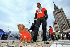 10 stycznia możecie pobiec również ze swoimi psiakami! :) Fot. Igor Kohutnicki